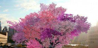 El árbol de los 40 frutos
